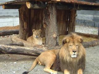 Plättli-Zoo © Plättli-Zoo